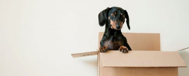 california residential movers- a dog in a moving box