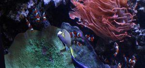 Monterey Bay Aquarium is famous worldwide.