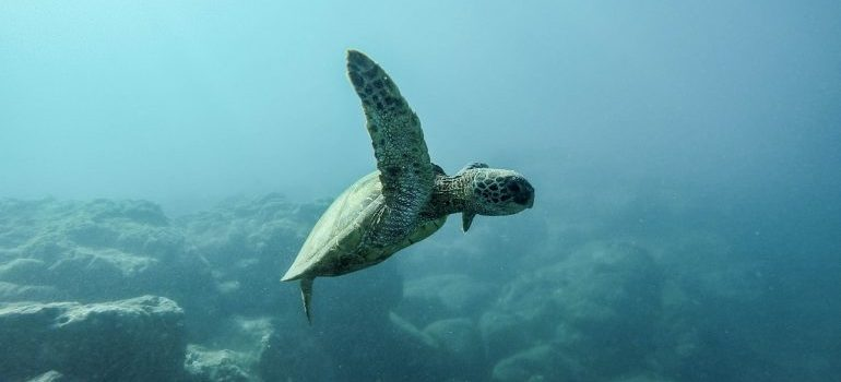 a see turtle swimming in a ocean