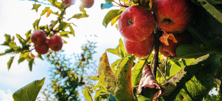 apples - Affordable West Coast cities to move to