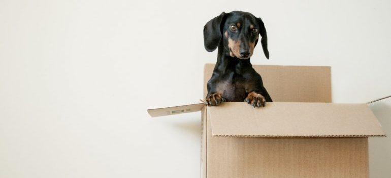 A puppy inside a box